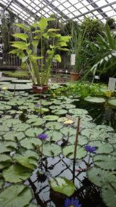 Besuch des Botanischen Gartens und mal wieder des Planetariums mit toller Show.